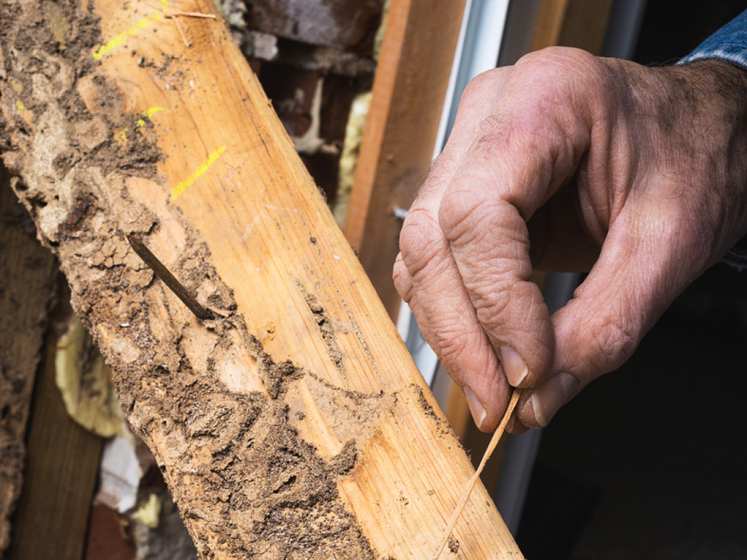 Termite Control in the Burlington, Mt. Pleasant, Wapello, IA area